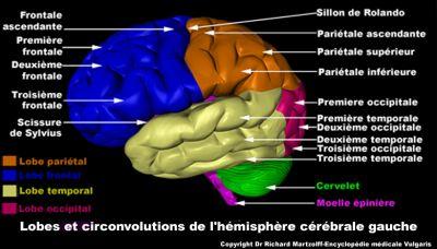 Mécanisme du langage dans le cerveau