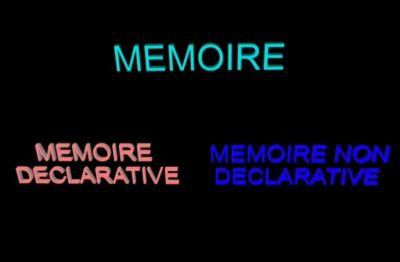 Mémoire déclarative et mémoire non déclarative