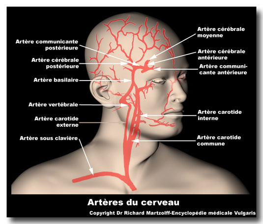 Image Photo Art 232 Res Du Cerveau Neurologie Vulgaris M 233 Dical