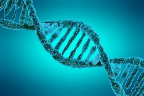 ADN et génétique