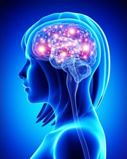 Neuropsychologie - Introduction aux fondements neuroanatomiques du cerveau
