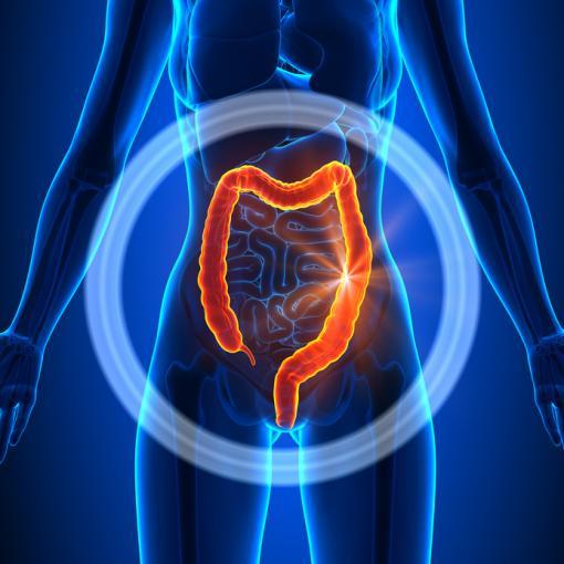Côlon : anatomie, fonctionnement, principales maladies