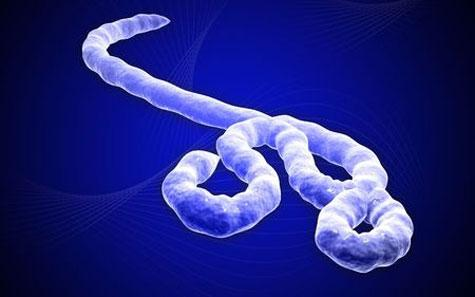Ébola : vers une épidémie mondiale ?
