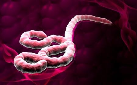 Ébola : la fièvre hémorragique s'étend en Guinée
