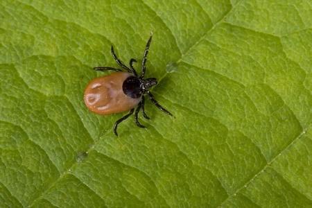 Gros plan sur la maladie de Lyme
