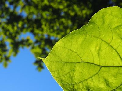 Les bienfaits de la chlorophylle
