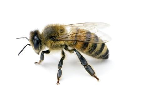 Urgence - Piqûre d'insecte volant