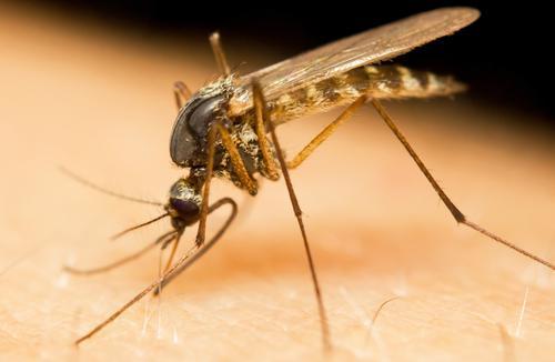 Moustiques :  5 produits naturels pour les éloigner