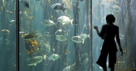 Les prochains traitements du cancer seront-ils issus de la mer ?