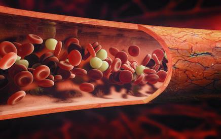Le sang : tout ce que vous devez savoir