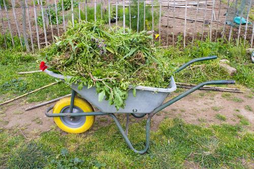 MAISON SAINE : 4 produits naturels pour éliminer les mauvaises herbes