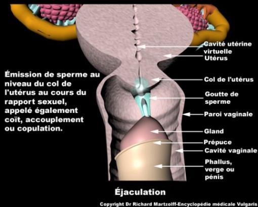 Éjaculation