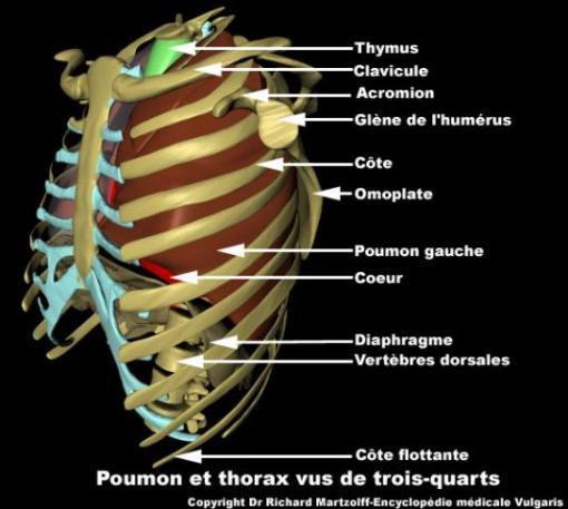 Au mouvement par le corps de la douleur dans le service de poitrine