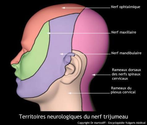 Nerf trijumeau : territoires neurologiques (schéma)