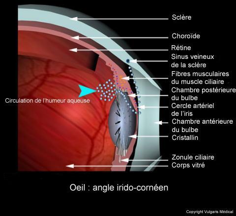 Oeil - angle irido-cornéen (schéma)