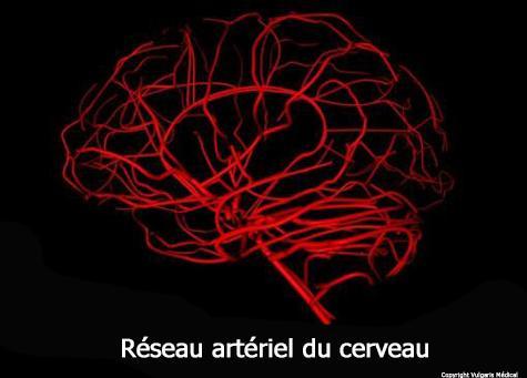 Réseau artériel du cerveau