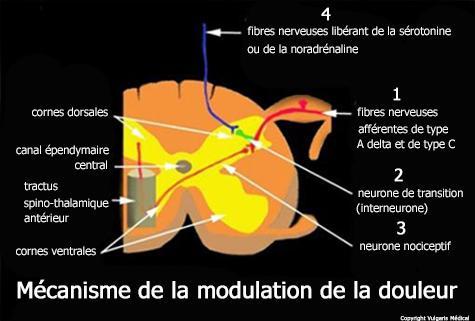 Mécanisme de modulation de la douleur (image)