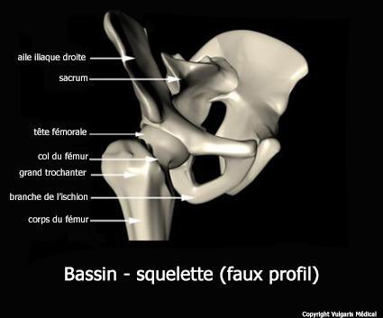 Bassin - squelette vu en faux profil (schéma)