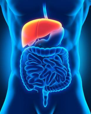 Mauvais fonctionnement du foie : signes biologiques et diagnostic