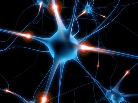 Eléments de base du traitement de l'information par le neurone