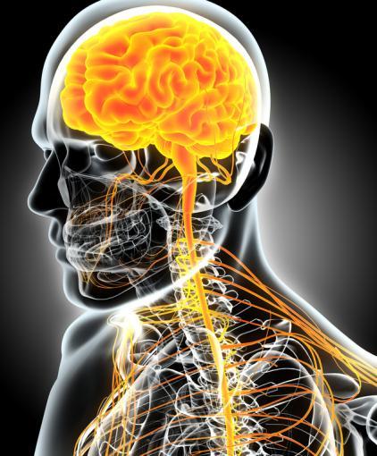 Système nerveux sympathique