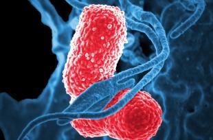 Diphtérie : symptômes, traitement, complications