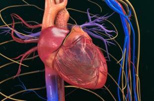 7 choses à savoir sur le coeur