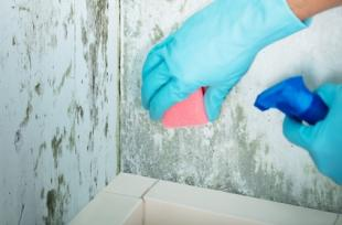 6 problèmes de santé causés par la moisissure