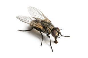 MAISON SAINE : 5 produits naturels pour éloigner les mouches