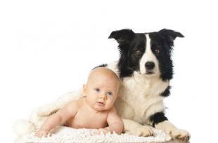 Exposer les bébés aux poils d'animaux domestiques les protège des allergies