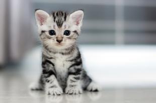 Le chat, source de bienfaits pour votre santé