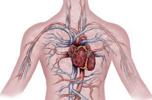10 choses à savoir sur l'appareil circulatoire