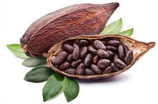 Les bienfaits inattendus de la coque de cacao