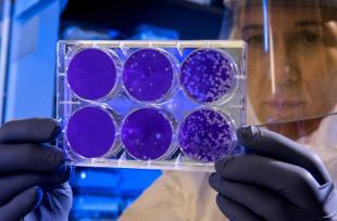 3 plantes efficaces contre les bactéries multirésistantes