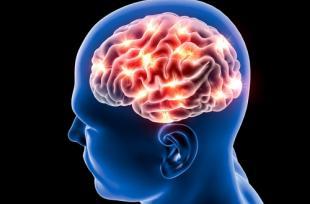 Impact de l'obésité sur le cerveau