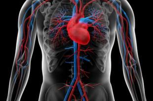 Prévention des risques cardiovasculaires: les plantes à privilégier et celles à éviter