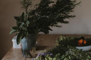 Alcool, tabac, calmants : des plantes pour aider au sevrage