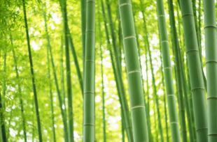5 bienfaits du bambou