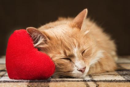 le chat source de bienfaits pour votre sant vulgaris m dical. Black Bedroom Furniture Sets. Home Design Ideas