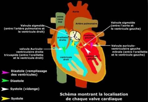 Endocardite : Causes, Symptômes, Traitements - Vulgaris Médical